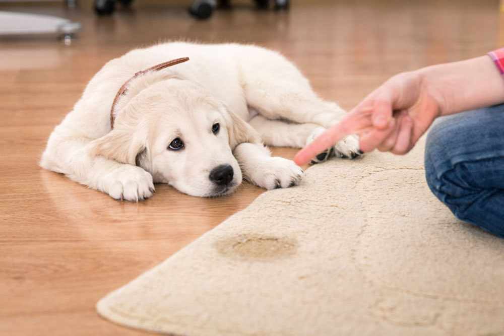 Pet stains and odor removal